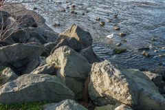 Gaivotas e rochas Imagens de Stock Royalty Free