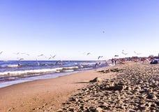 Gaivotas em uma praia no mar imagens de stock royalty free