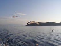 Gaivotas em voo, montanha no fundo Foto de Stock Royalty Free