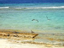 Gaivotas na costa rochosa Foto de Stock Royalty Free