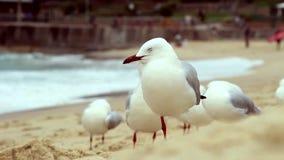 Gaivotas na praia filme
