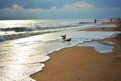Gaivotas na praia Foto de Stock