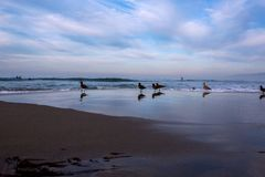 Gaivotas na praia fotos de stock royalty free