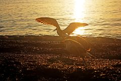 Gaivotas na praia Foto de Stock Royalty Free