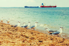 Gaivotas na praia Imagens de Stock Royalty Free