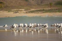 Gaivotas na praia, Cabo Ledo, Luanda, Angola imagens de stock