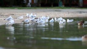 Gaivotas no lago video estoque
