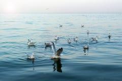 Gaivotas no mar Imagens de Stock
