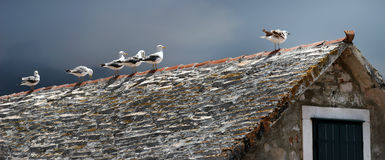 Gaivotas no telhado fotografia de stock royalty free