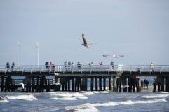 Gaivotas praia e cais Foto de Stock Royalty Free