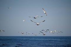 Gaivotas que caçam para peixes com o Lago Ontário que mostra a água azul e o céu azul imagens de stock royalty free
