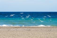 gaivotas que descolam na costa Imagens de Stock