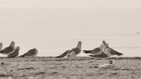 Gaivotas que sentam-se na praia video estoque