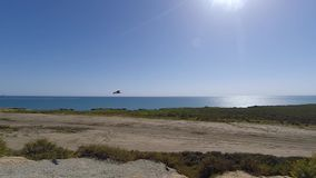 Gaivotas que sobem no vento ao longo da costa de Califórnia do sul em um dia de verão ensolarado filme
