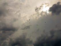 Gaivotas que voam acima no céu contra um céu dramático Fotos de Stock