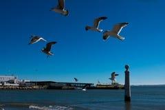 Gaivotas que voam a espera a ser alimentada Tagus River foto de stock