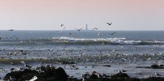 Gaivotas que voam sobre o oceano Fotos de Stock