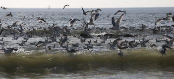 Gaivotas que voam sobre o oceano Fotografia de Stock