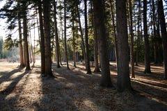 Gaj drzewa z ciekawym światłem i cieniami obraz royalty free