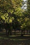 Gaj z drzewami i światłem zdjęcie stock