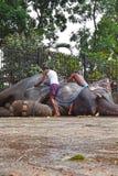 Elephant at Sri Dalada Maligawa Kandy, Sri Lanka. Gajaba one of the biggest elephants in Sri Lankan with his mahout Ratnayake during the perahera season 2917 at Royalty Free Stock Images