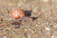 Gaju ślimaczek na piasku Obrazy Royalty Free