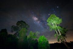 Galáxia da Via Látea, céu noturno com estrelas surpreendentes de uma árvore Foto de Stock Royalty Free