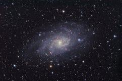 Galáxia M33 na constelação de Triangulum. fotografia de stock