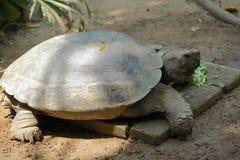 Galápagos tortoise Stock Photo