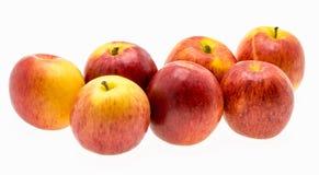 Galaäpfel über weißem Hintergrund Stockfotos