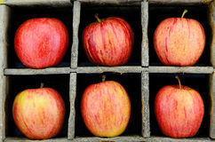 Gala Apple Foto de Stock