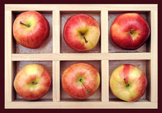 Gala apple in box Stock Images