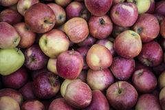 Gala apple Stock Image