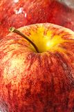 Gala apple close up Royalty Free Stock Photography