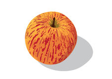Gala apple. A Royal gala apple has beautiful different colour of skin Stock Photos