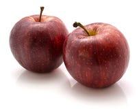 Gala Apples photographie stock libre de droits