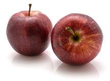 Gala Apples images libres de droits