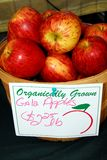 Gala Apples. A Basket loaded with fresh apples Royalty Free Stock Photography