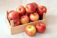 Gala apples Stock Images