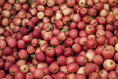 Gala Apples royaltyfria foton