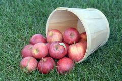 Gala Apples photo stock
