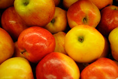 Gala Apples. Red and Yellow Gala Apples Royalty Free Stock Photo
