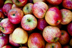 Gala Apples Stock Photos