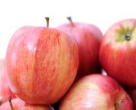 Gala apples Royalty Free Stock Photo