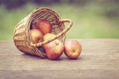 Gala apples in the basket on old table Stock Photography