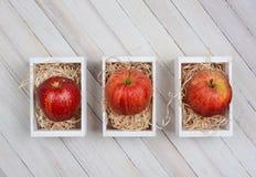 Gala Apples en Mini Crates images libres de droits