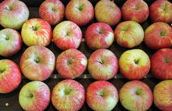 Gala Apples at the fair Royalty Free Stock Images