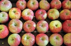 Gala Apples på mässan Royaltyfria Bilder