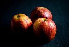 Gala Apples reale Fotografia Stock