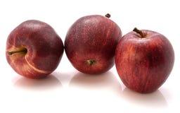 Gala Apples Stock Photography